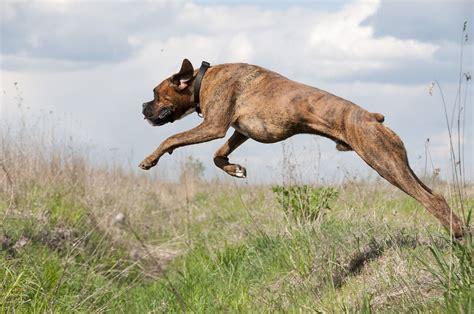 preventstop dog jumping