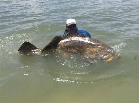grouper goliath lb atlantic reel kayak shows fisherman florida