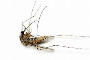 Was Mögen Mücken Nicht : insekten m cken k nnen bei nebel nicht geradeaus fliegen die welt ~ Frokenaadalensverden.com Haus und Dekorationen