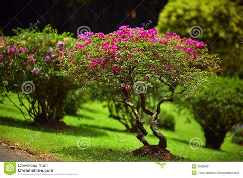 beautiful small trees for garden beautiful green garden lawn with pink bushes stock photo image 50926827