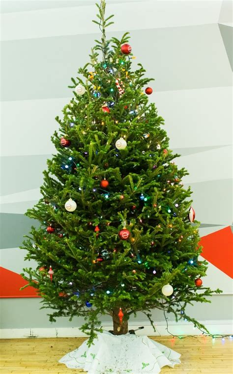 apartment size christmas tree s trees tree delivery service nyc