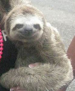 98 best images about Sloths for Chase on Pinterest | Sid ...