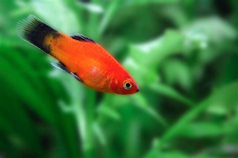 great types  fish    pets petbarn