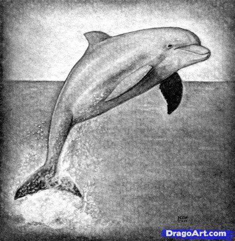 draw  realistic dolphin step  step realistic