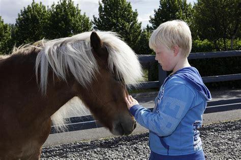 enc horses animals intelligent karen greatly sensitive jun mccomb