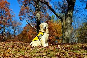 service dogs by warren retrievers delivers dave to springfield oregon