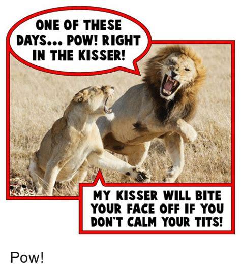 Calm Your Tits Meme - 25 best memes about pow right in the kisser pow right in the kisser memes