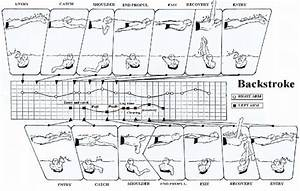Modelling Of Arm Stroke Phases In Backstroke Between Left