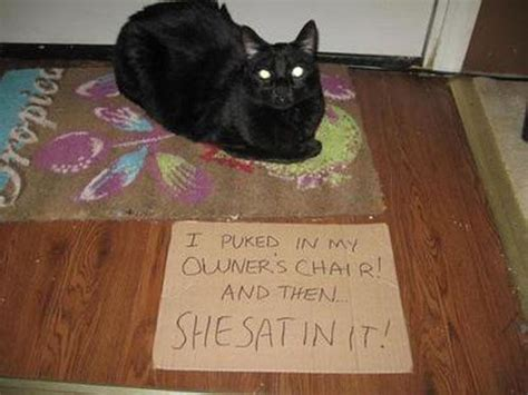 cat shaming damn cool pictures