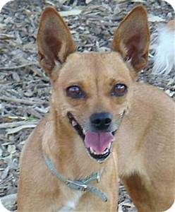 Little One   Adopted Dog   07-19-13-06   Red Bluff, CA ...