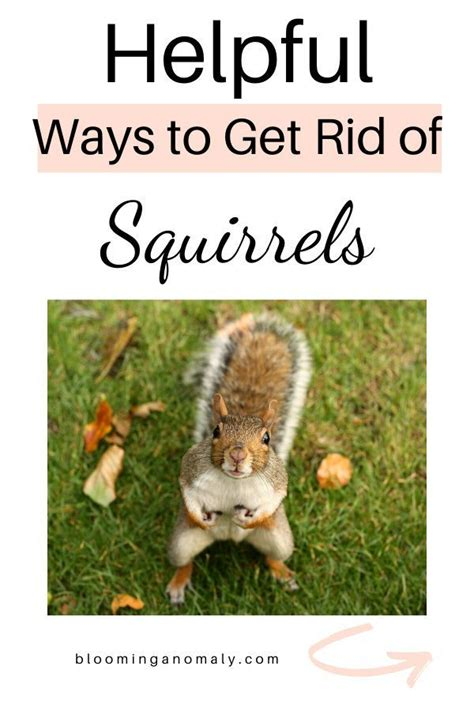 Let me know what works for you. Keep Squirrels Out Of Garden Coffee Grounds - Fishing Boats Blog