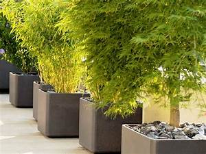 Modern Large Flower Pots for Outdoors : Attractive Large