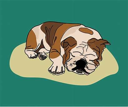 Sleeping Dog Graphic Illustration Drawing Vector Bulldog