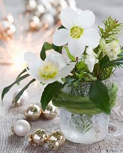 Blumen Im Winter : winterliche blumenarrangements im westwing magazin ~ Eleganceandgraceweddings.com Haus und Dekorationen