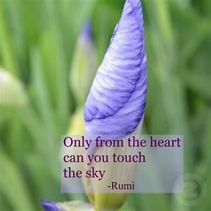 Inspirational Quotes Rumi. QuotesGram