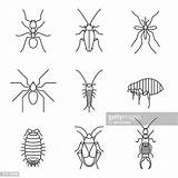 Silverfish Insect Illustrations Icons Clipart Vector sketch template