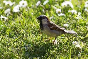 Kleine Vögel Im Garten : wohlf hloase f r tiere ein tierfreundlicher garten ~ Lizthompson.info Haus und Dekorationen