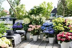 Blumen Für Schatten : balkon deko ideen 2015 balkonpflanzen und kr uter ~ Lizthompson.info Haus und Dekorationen