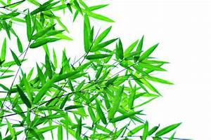 Bambus In Kübeln : bambus das wachstum f rdern sie so ~ Michelbontemps.com Haus und Dekorationen