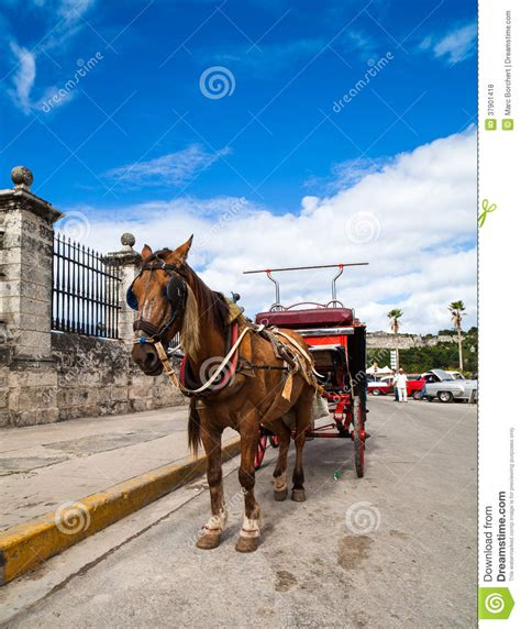 carrozza a cavalli carrozza a cavalli di cuba avana fotografia stock