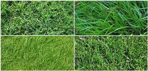 Choose A Grass Type For Your Lawn