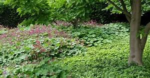 Schattenpflanzen Garten Winterhart : bodendecker gegen unkraut mein sch ner garten ~ Sanjose-hotels-ca.com Haus und Dekorationen