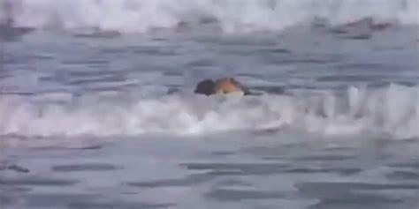 spotted  terrifying sea monster
