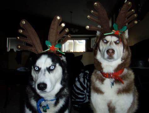 Costumes That Prove Huskies Always Win At Halloween