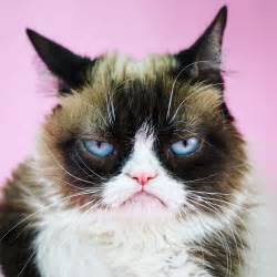 what of cat is grumpy cat may 26th 2017 grumpy cat 174