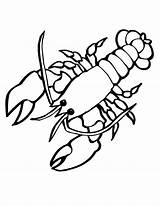 Lobster Coloring Sea Pages Animals Drawing Animal Crayfish Printable Clasp Outline Cartoon Cute Giant Creatures Colouring Ocean Clipart Drawings Silhouette sketch template