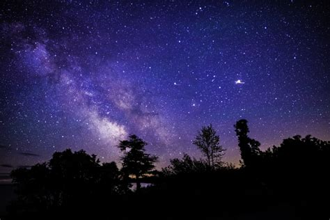 Milky Way Above Trees Sand Dunes Image Free Stock