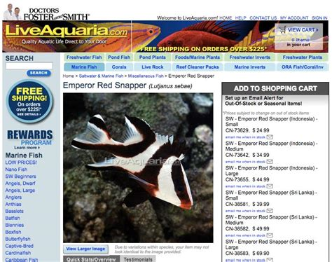 tankbuster snapper emperor juvenile pound room offered aquaria species internet future pounds kg inches grow cm