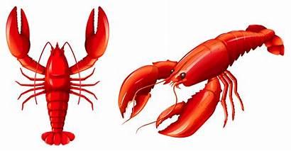 Lobster Langosta Hummer Crawfish Kreeft Homard Aragosta