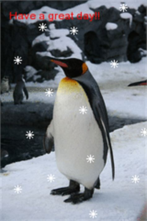 great day penguin good day graphics  facebook