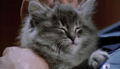 Head Cat Gifs Massage Kittens Cutest Ever