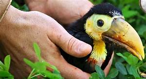 A Baby Toucan Getting Fed Is Very Cute And Very Noisy - Digg