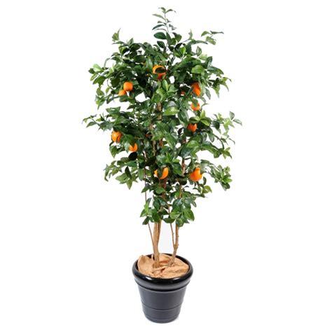 oranger semi naturel elementvegetal grossiste en plantes stabilis 233 es et plantes