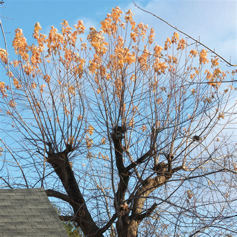 common pruning mistakes    fix