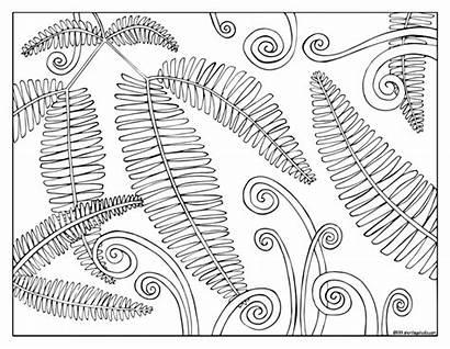 Coloring Fern Fauna Flora Sheets Leg Short