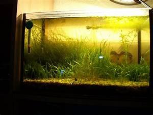 Aquarium Ohne Wasserwechsel : garnelenbecken und technik aquarium forum ~ Eleganceandgraceweddings.com Haus und Dekorationen