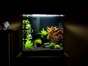 60 Liter Becken : ik mijn auto rennen filter 30 liter aquarium fur fische ~ Michelbontemps.com Haus und Dekorationen