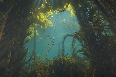 ingredient spotlight kelp   amazing seaweeds
