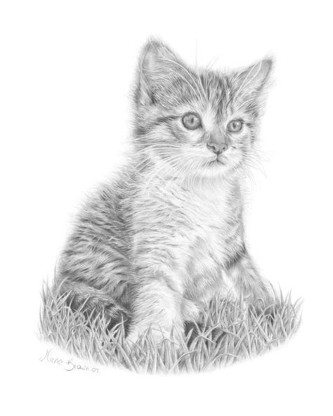 kitten pencil drawing cat art print gift  cat lover