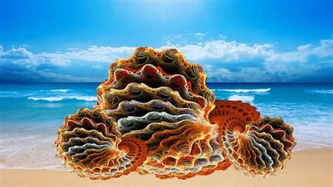 coquillages moules palourdes image gratuite sur pixabay
