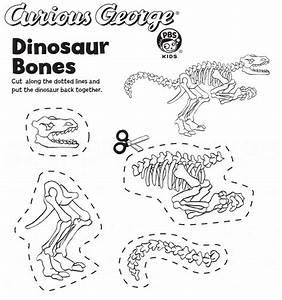 25 Best Dinosaur Bones Ideas On Pinterest Dinosaur Party