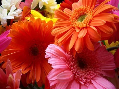 Flowers For Flower Lovers Flowers Beauty Desktop Wallpapers