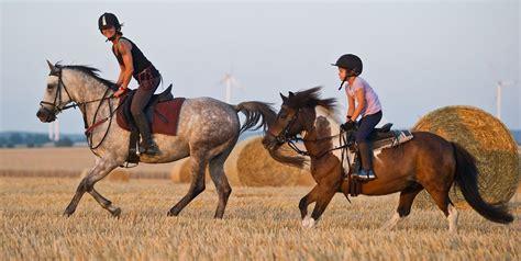 pferde als hobby sollte ich meinem kind das reiten