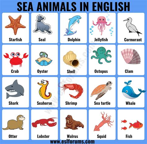 Sea Animals: List of 20+ Interesting Sea Ocean Animals