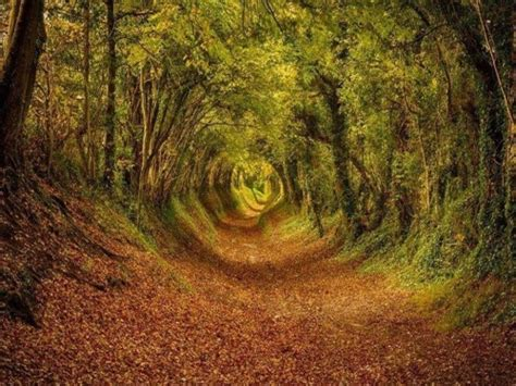 The Tree Tunnel In Ashdown Forest, The Inspiration