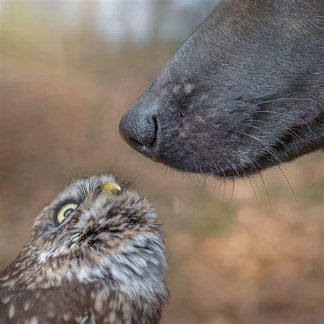unusual friendship  dog  owl